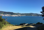 Mt Vic Walk 2