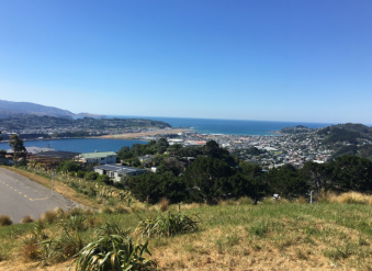 Mt Vic Walk - top