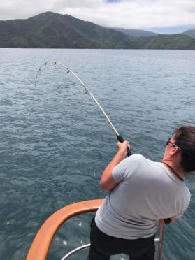 Baracuda Catch
