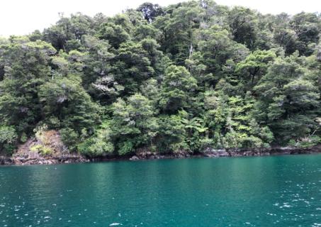 Flipper Bay
