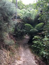 Picton to Waikawa 11
