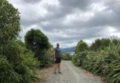 Picton to Waikawa 3