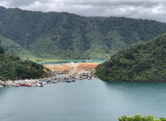 Picton to Waikawa - Logs