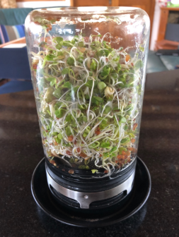 Sprouts Final