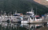 19 Mussel Boats in marina