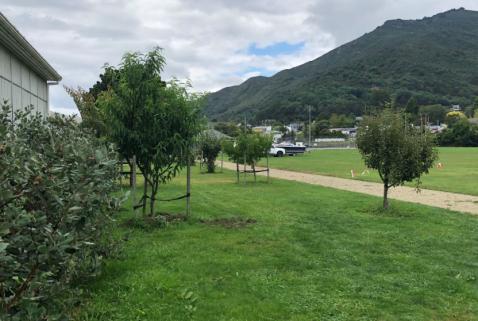 30 Community Orchard 2