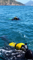 B and Jodi diving