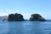 Duffers Reef Dive spot