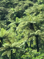 Foliage in Ferndale