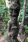 Punga Tree Faces