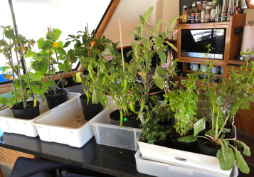 Plants still alive